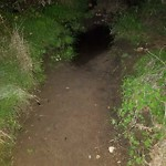 Storm Drain at Robyn's Egg Trail