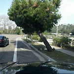 Tree Hazard at 2931 CAMINO DEL RIO NORTH