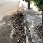 Street Sweeping at 6886 Millbrook St
